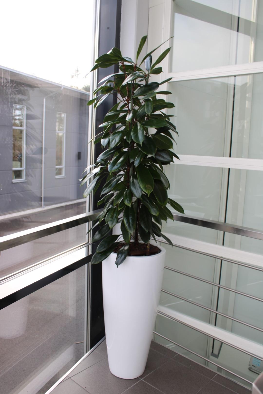 växter online shop